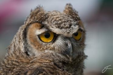 Owl Eyes. Image © Julie Corcoran.